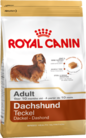 dachshund-adult_productImage