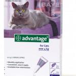 Advantage_Cats_4P_SP_O4KG_3DF_LR