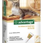 ADVANTAGE CAT SMALL  ORANGE  6'S